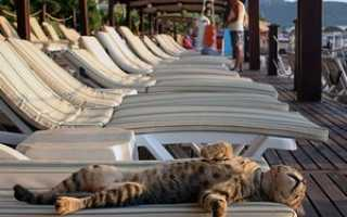 Заявление на отпуск: сроки подачи